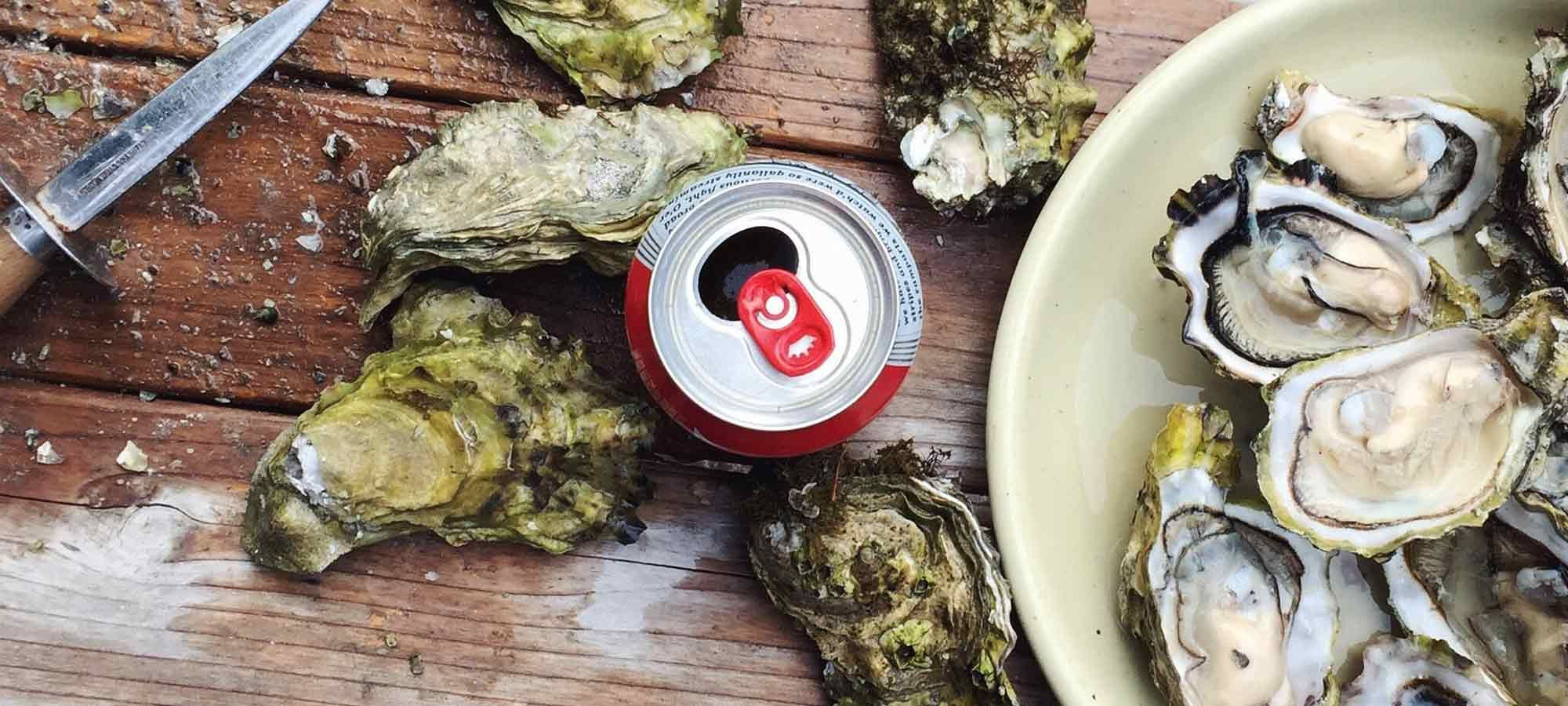 florida-oysters-lead